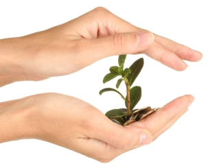 Fiduciaria-Fiduciaria-handsplantWeb